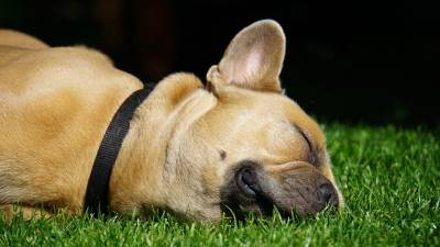 Top 7 Low-Maintenance Breeds in the World