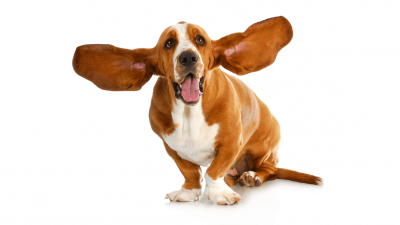 Are Homemade Ear Cleaners Safe for Dogs?