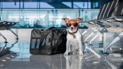 How To Choose Dog Carrier?