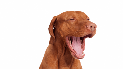 Dog Bad Breath: What To Do?