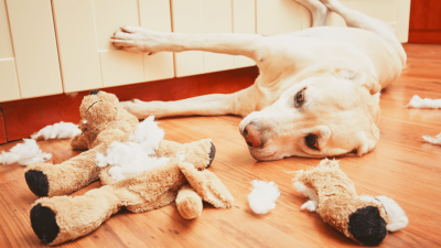 Separation Anxiety In Dogs - How To Stop It