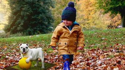 The 11 Best Dogs for Kids