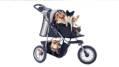 Best Dog Strollers in 2021