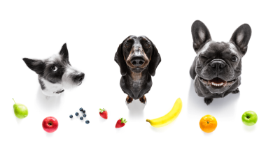 Healthy Fruits That Are Safe For Dogs