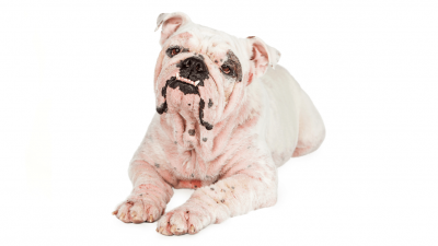 Hot Spots on Dogs and What to Do About Them