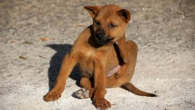Tips to Help Protect Your Dog From Fleas and Ticks
