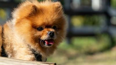 15 Fluffy Dog Breeds Perfect For Snuggles