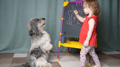 How to Teach a Dog to Sit [3 Easy Steps]
