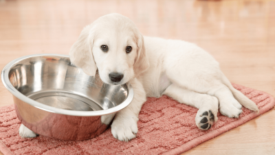 Top 3 Best Vet-Recommended Puppy Food