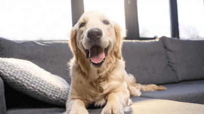 Golden Retriever Hero Moments