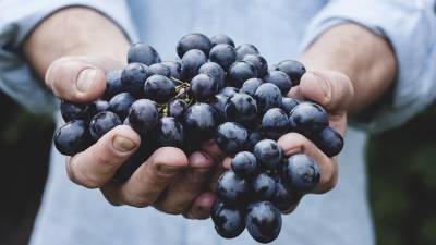 Dogs and Grapes - Owners Beware!