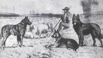 Dogs in Ancient World