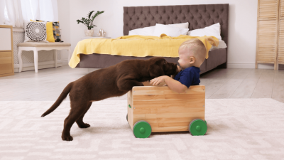 Dogs And Kids - Full Guide