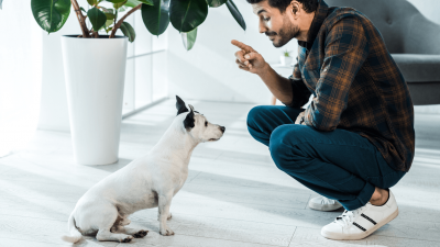 Dog Commands All Dogs Should Know