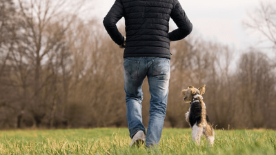 Albon for Dogs - Usage & Side Effects