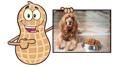 How to Safely Feed Peanuts to Your Dog?