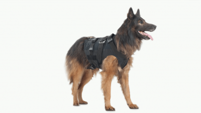 Top 3 Weighted Dog Vests to Choose
