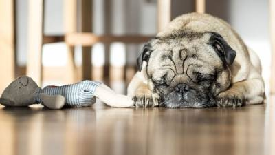 Is Your Dog Twitching in Their Sleep - Here's What it Means