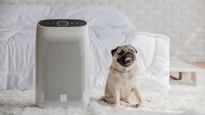 The Best Air Purifiers for Dogs in 2021