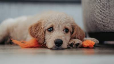 Beware of Puppy Mills and Uncontrolled Dog Selling