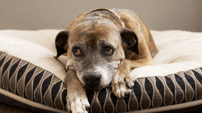 Is Proin for Dogs Worth It?