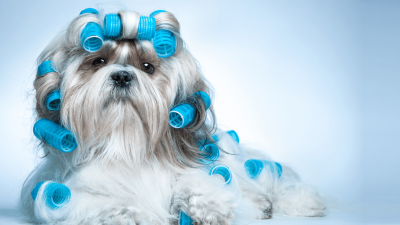 How to Groom a Dog - Basic Guide DIY Grooming
