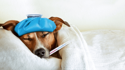 Can Dogs Get Colds