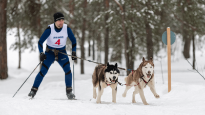 Skijoring - Why You Have to Try It