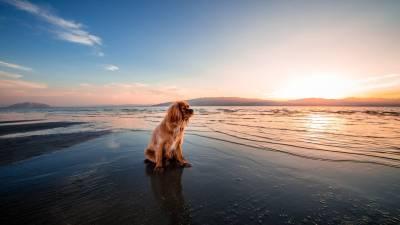 Will Sea & Salt Damage Your Dog Skin & Coat