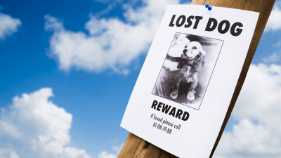 Stolen Dogs - What to do in Case of Dognapping