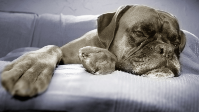Signs of Stroke in Dogs