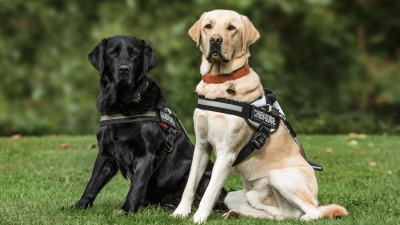 Best Dog Harness for Your Dog