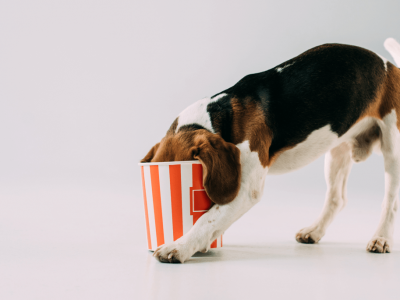 Is Popcorn Safe For Dogs?