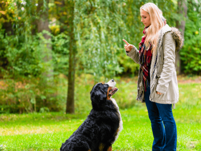What Will Obedience Training Teach Your Dog?