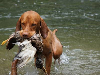 Best Hunting Dog Breeds