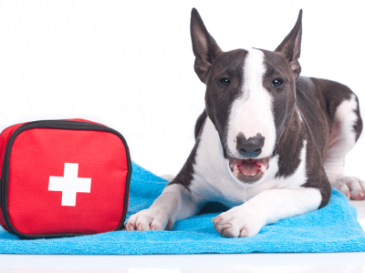 Best Dewormers For Your Dog