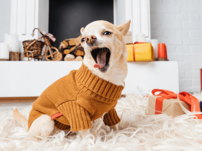 Should my Dog Wear a Dog Sweater?