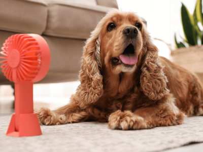 Best Dog Cooling Mats for Summer 2021