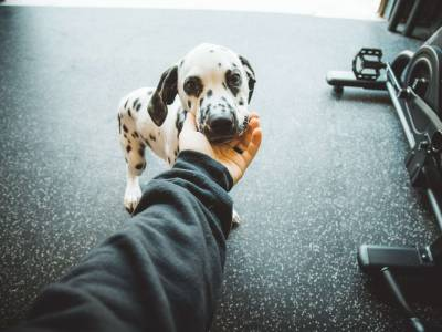 7 Things You Didn't Know About Dalmatians