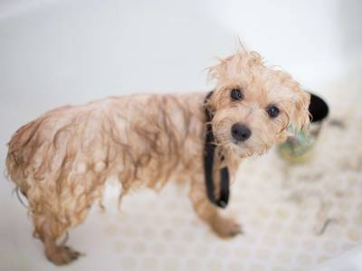 Why dog grooming is so important