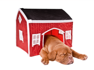 Igloo Dog House: What is the Best Option for Your Dog?