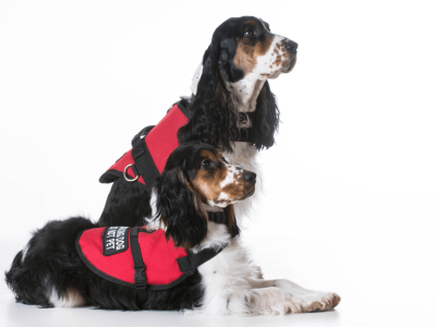 What Is The Best Service Dog Vest?