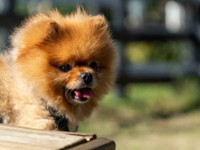15 Fluffiest Dog Breeds In Different Sizes