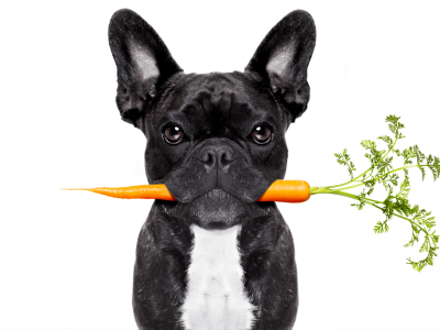 Should You Allow Your Dog To Eat Carrots?