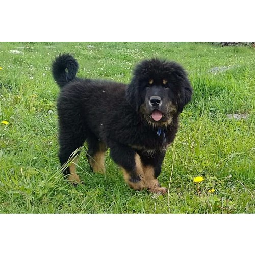Dogs list | World Dog Finder - buy or adopt dogs