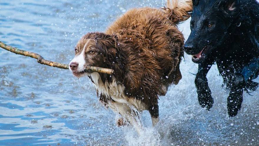 What Are The Most Active Dog Breeds?