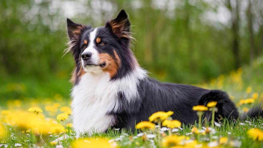 What is Selective Breeding?
