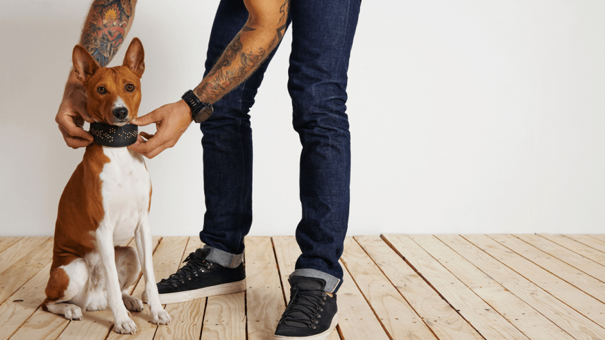 How To Choose the Best Leather Dog Collars?