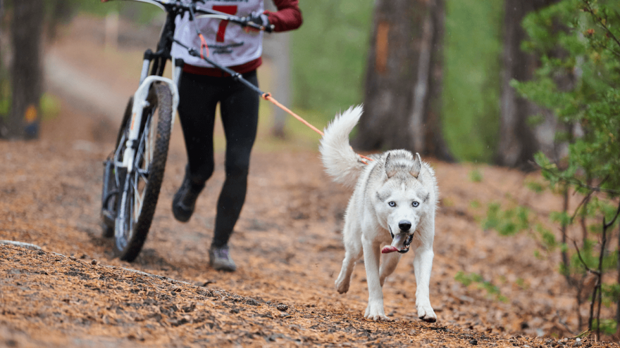 Is Bikejoring Right for You and Your Dog