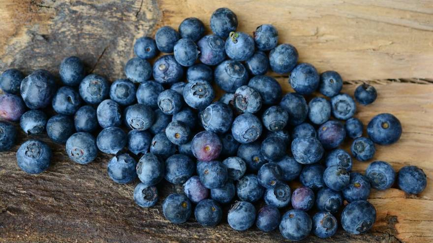 Best Sources of Fiber for Dogs